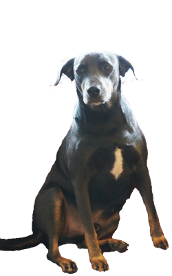 Guitar Dog Rufus